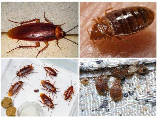 ДЕЗИНСЕКЦИЯ уничтожение клопов,тараканов,муравьев,крыс,клещей,блох,ос!