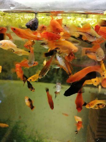 Pești exotici