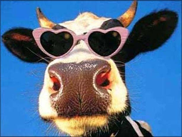 Продам взрослую корову