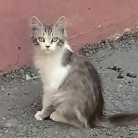 Котяткам нужен дом