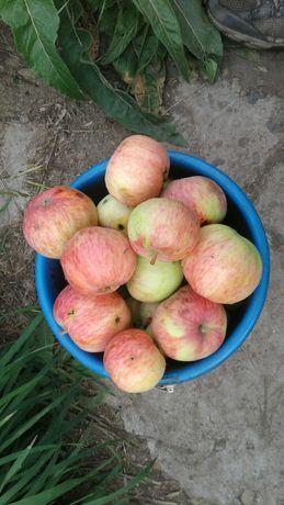 Продам яблоки, обмен, жиланды