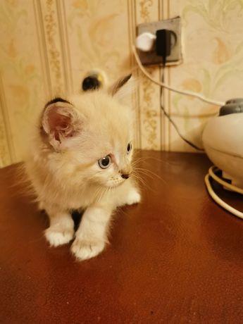 Отдам котёнка бесблатно