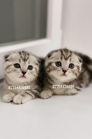 Продажа элитных котят с документами