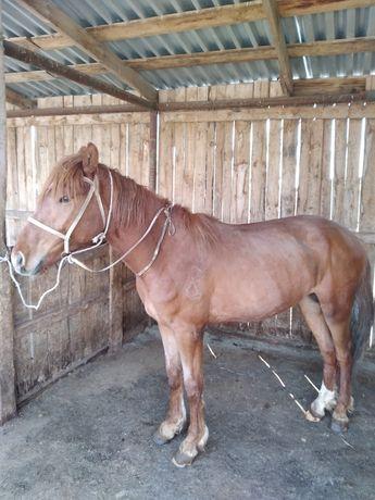 Продам лошадь трехлетку