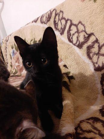 Котенок девочка ( 3 месяца)