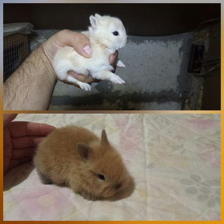 Мини зайци от ферма