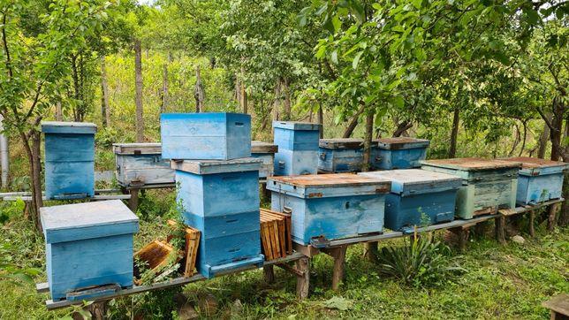 Vând rame cu albine sănătoase