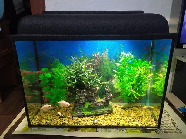 Заводской аквариум + бонусы и рыбки.