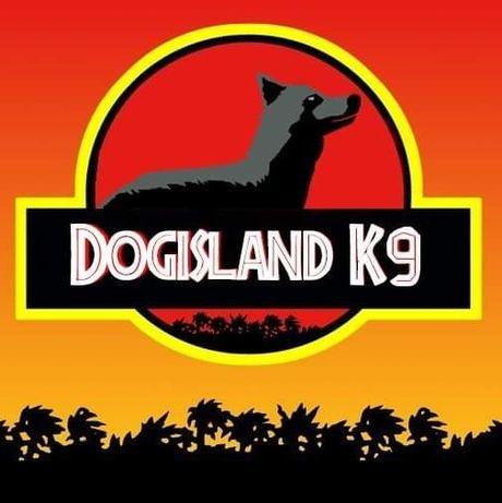 Dresaj canin Dogisland K9 Brașov