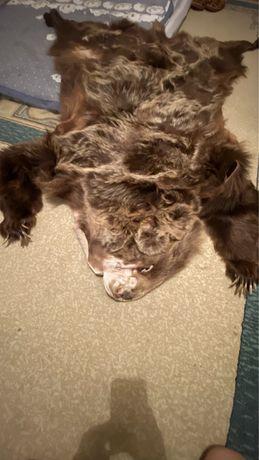 Шкура бурого медведя