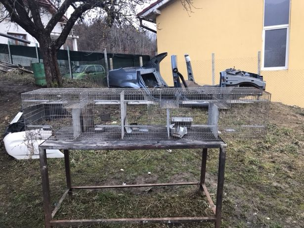 Custi iepuri chinchila păsări