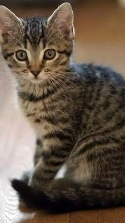 Девочка, стерилизована котят не будет!