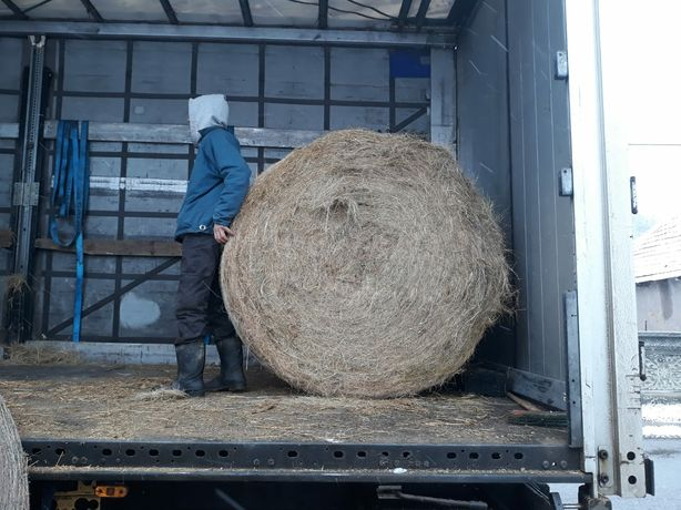 Baloti fan Transport inclus 500 b.toata tara.Lucerna Porumb.Rotunzi.