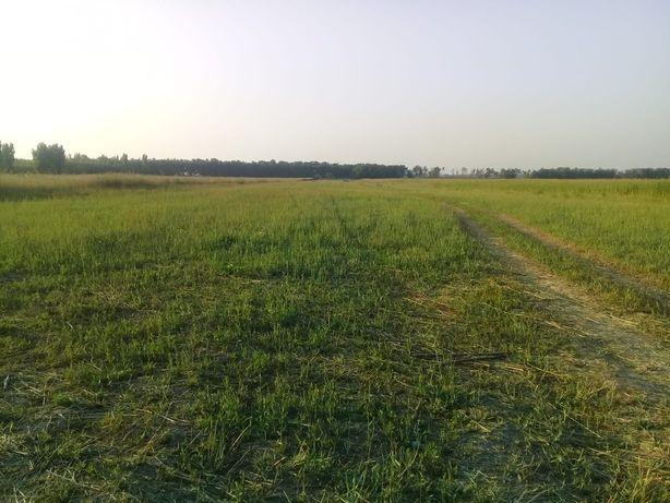 Внимание земельный участок по Ташкентской трассе между 19км и Бахаром