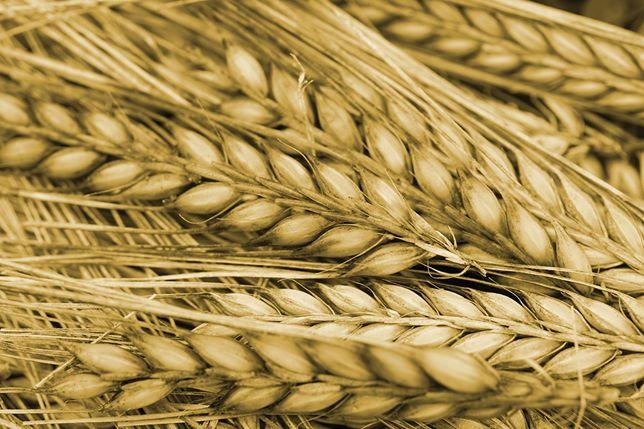 Продам зерно  в мешках  по 60 кг