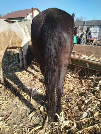 Vand doi cai curați cuminți se face și probă