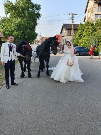 Închiriez trasura și cai pentru evenimente.