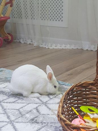 Ручной кролик декоративный