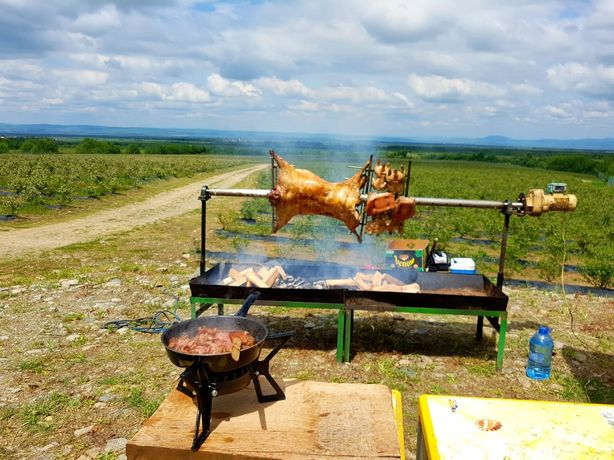 evenimente protap rotisor animale vitel miel purcel