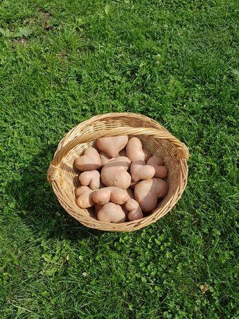 Cartofi de consum rosii