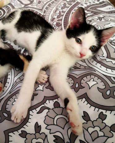 ADOPTIE - 2 pisicute iubitoare si educate, deparazitate si vaccinate