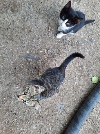 Дарим красивых котят