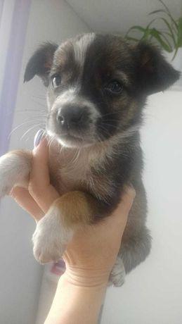 щенок в добрые руки