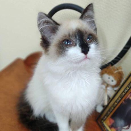 Очаровательная голубоглазая лапочка и гипер ласковая   красавица-Алиса