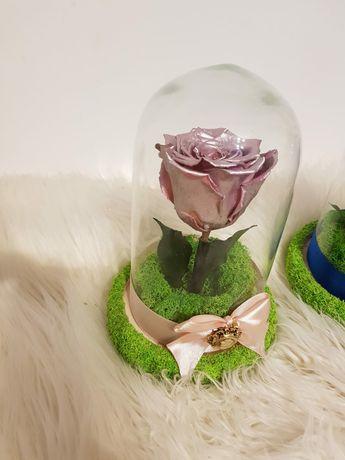 Trandafir criogenat colorat in cupola 16 x 9 cm