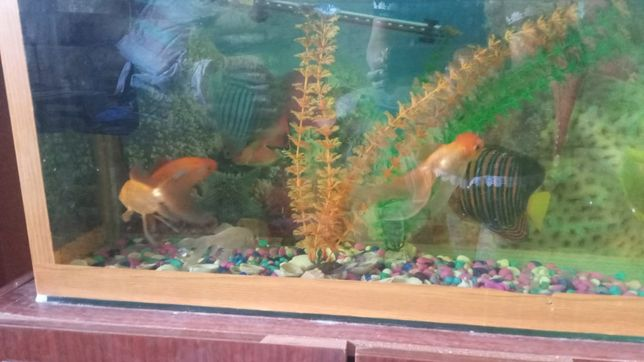 Продам аквариум большой