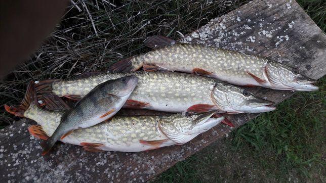 Pescuit sportiv Delta