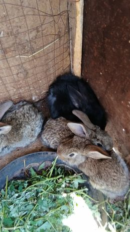 Кролики продадим