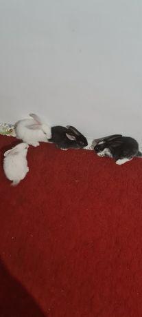 Кролики 1месяц 10штук