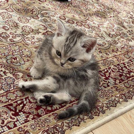 Продается котенок 1.5 месяца