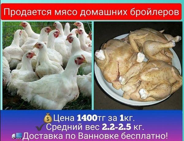Продаётся мясо курей