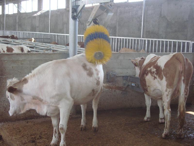 Perie automată scărpinare vaci - CONFORT - SĂNĂTATE - PRODUCȚIE LAPTE Craiova - imagine 1