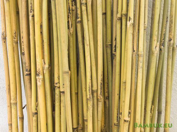 Бамбук на пръчки 210см дължина и 2 см диаметър