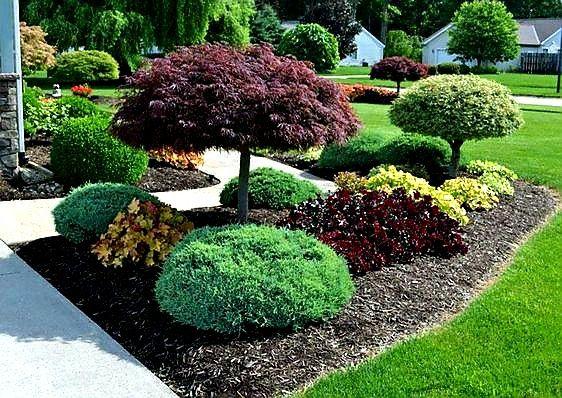 Plante ornamentale, tuia, copaci, brazi, magnolia, tei mesteacan.