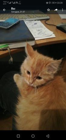 Кошак рыжый красивая