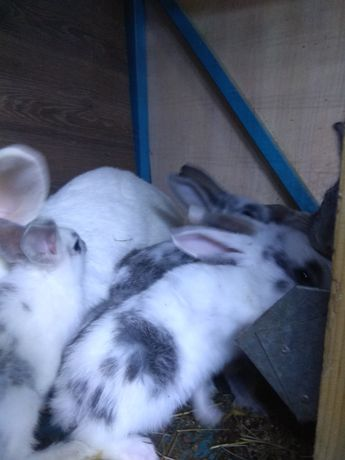 Крольчата миксы разные