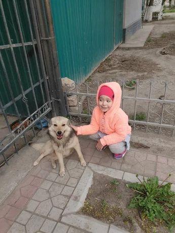 """Приют для собак """"Территория добра Алматы"""""""