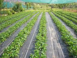 Agrotextil Mulcire: 1,85m; 2,10m; 3,05m; 3,30m; 4,20m; 5,25m CALITATIV