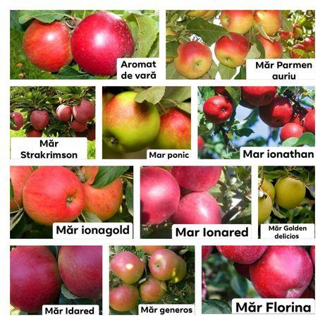 Pomi fructiferi anul 3