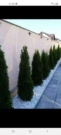 Plante din prpopia pepenieră diferite mărimi diferite speci