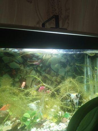 Продам аквариум 80 литров и всё что нужно для него