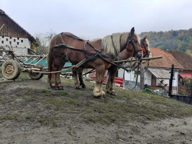 Vând cai  Preț: 3200euro
