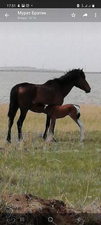Продам лошадь с жеребёнком,жеребёнок сейчас подрос