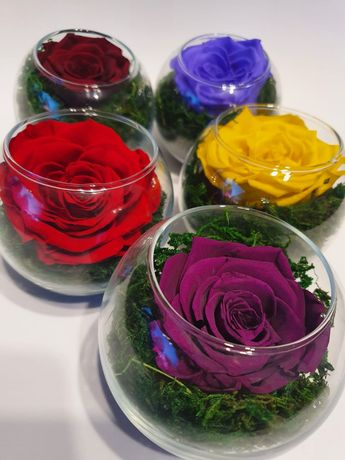 Trandafiri criogenati cadouri