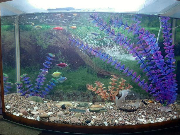 Продам аквариум срочно