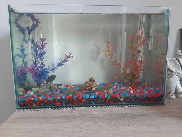 Аквариум за риби
